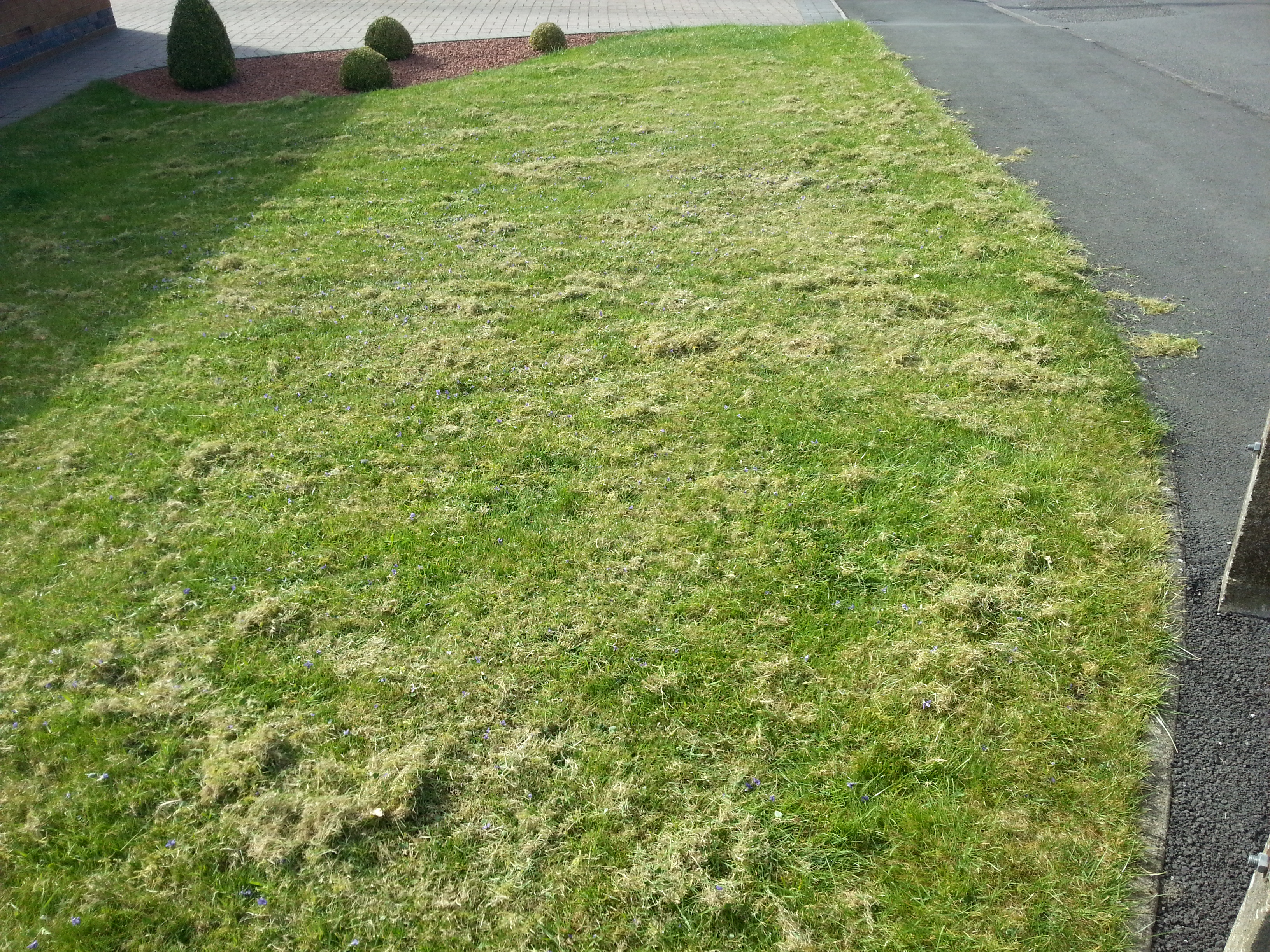 How often should i scarify alfreton gardener for How often should you mow your lawn
